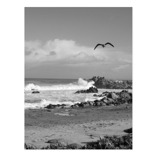 Pacific Grove Storm in Black & White Postcard