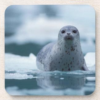 pacific harbor seal, Phoca vitulina richardsi Beverage Coasters