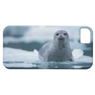 pacific harbor seal, Phoca vitulina richardsi Case For The iPhone 5