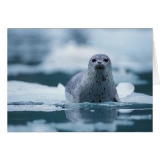 pacific harbor seal, Phoca vitulina richardsi Greeting Card