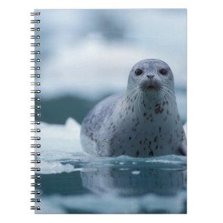pacific harbor seal, Phoca vitulina richardsi Notebooks