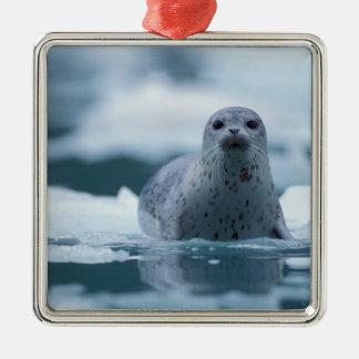 pacific harbor seal, Phoca vitulina richardsi Silver-Colored Square Decoration