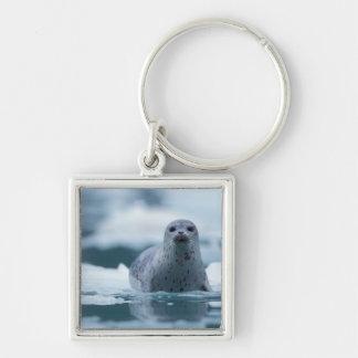 pacific harbor seal, Phoca vitulina richardsi Silver-Colored Square Key Ring