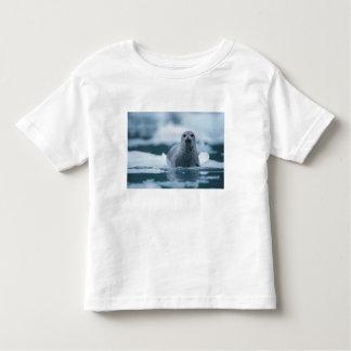 pacific harbor seal, Phoca vitulina richardsi Toddler T-Shirt