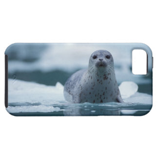 pacific harbor seal, Phoca vitulina richardsi Tough iPhone 5 Case