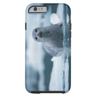 pacific harbor seal, Phoca vitulina richardsi Tough iPhone 6 Case