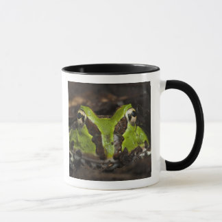 Pacific Horned Frog Ceratophrys stolzmanni) 2 Mug