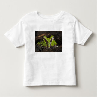 Pacific Horned Frog Ceratophrys stolzmanni) 2 Toddler T-Shirt