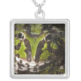 Pacific Horned Frog Ceratophrys stolzmanni) 3 Pendant