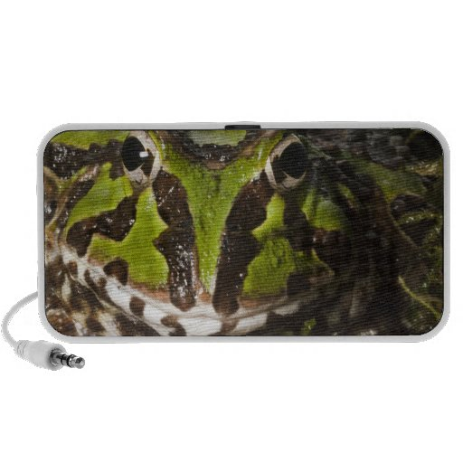 Pacific Horned Frog Ceratophrys stolzmanni) 3 Notebook Speaker