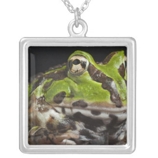 Pacific Horned Frog Ceratophrys stolzmanni) Silver Plated Necklace