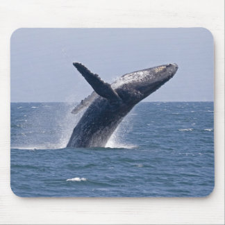 Pacific Humpback Whale... Mouse Pad
