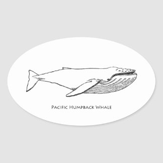 Pacific Humpback Whale Oval Sticker