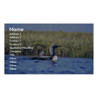 Pacific Loon or Arctic Loon and Brood Business Card Template