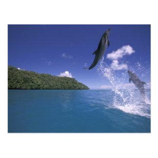 Pacific, Micronesia, Palau, Bottlenose 2 Postcard