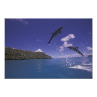 Pacific, Micronesia, Palau, Bottlenose 3 Poster