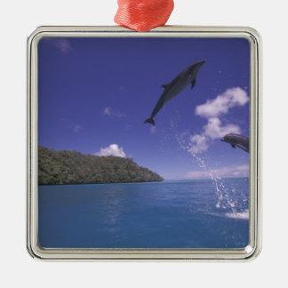 Pacific, Micronesia, Palau, Bottlenose 3 Silver-Colored Square Decoration