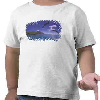 Pacific, Micronesia, Palau, Bottlenose 3 Shirts