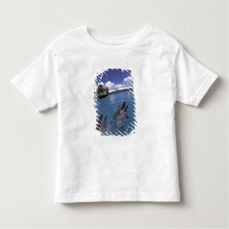 Pacific, Micronesia, Palau, Bottlenose Tee Shirts