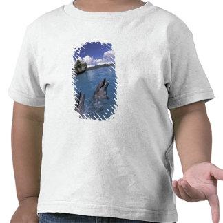 Pacific, Micronesia, Palau, Bottlenose Shirts