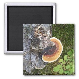 Pacific Northwest Fall Mushroom Magnet