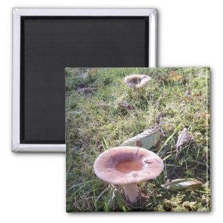 Pacific Northwest Mushroom Magnet