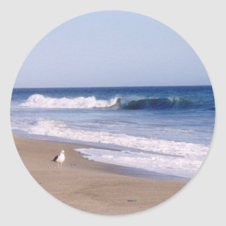 Pacific Ocean Gull Classic Round Sticker