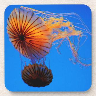 Pacific Sea Nettle (Chrysaora Fuscescens) Coaster