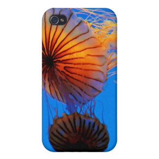 Pacific Sea Nettle (Chrysaora Fuscescens) iPhone 4 Case