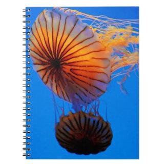 Pacific Sea Nettle (Chrysaora Fuscescens) Notebooks