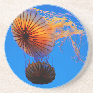 Pacific Sea Nettle (Chrysaora Fuscescens) Sandstone Coaster