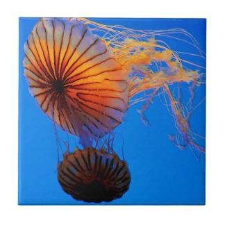 Pacific Sea Nettle (Chrysaora Fuscescens) Small Square Tile