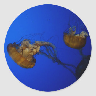 Pacific Sea Nettle Jellyfish Stickers