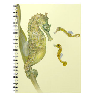 Pacific Seahorse Family Notebook