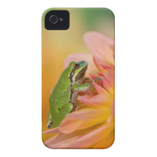 Pacific tree frog on flowers in our garden, 2 Case-Mate iPhone 4 case