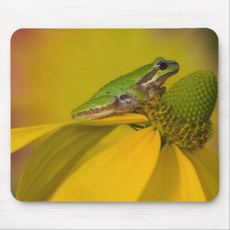 Pacific tree frog on flowers in our garden, 2 mouse mat