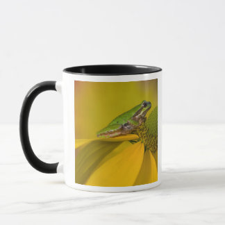 Pacific tree frog on flowers in our garden, 2 mug