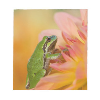 Pacific tree frog on flowers in our garden, 2 notepad