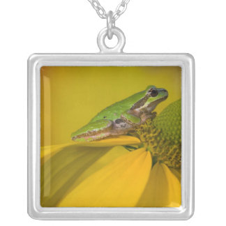 Pacific tree frog on flowers in our garden, 2 silver plated necklace