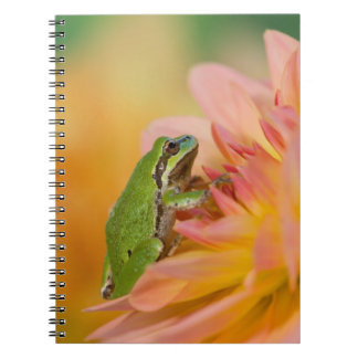 Pacific tree frog on flowers in our garden, 2 spiral notebook