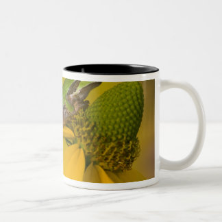 Pacific tree frog on flowers in our garden, 2 Two-Tone coffee mug