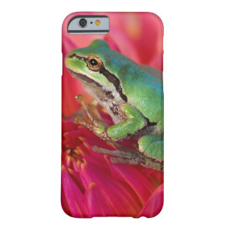 Pacific tree frog on flowers in our garden, 4 barely there iPhone 6 case
