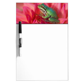 Pacific tree frog on flowers in our garden, 4 dry erase board