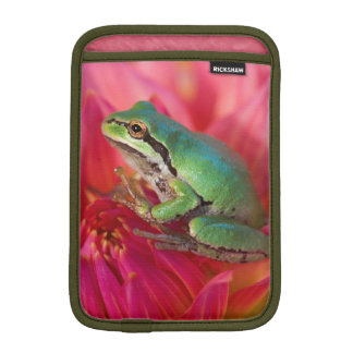 Pacific tree frog on flowers in our garden, 4 iPad mini sleeve