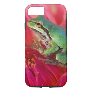 Pacific tree frog on flowers in our garden, 4 iPhone 7 case