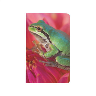 Pacific tree frog on flowers in our garden, 4 journal