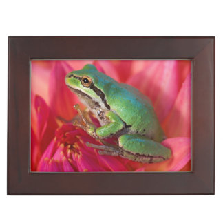Pacific tree frog on flowers in our garden, 4 keepsake box
