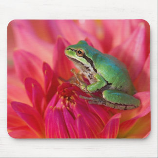 Pacific tree frog on flowers in our garden, 4 mouse pad