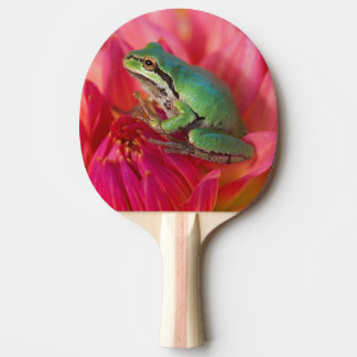 Pacific tree frog on flowers in our garden, 4 ping pong paddle