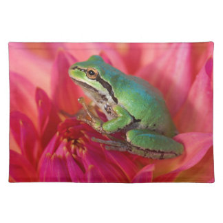 Pacific tree frog on flowers in our garden, 4 placemat